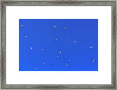 Seagulls In The Blue Sky Framed Print