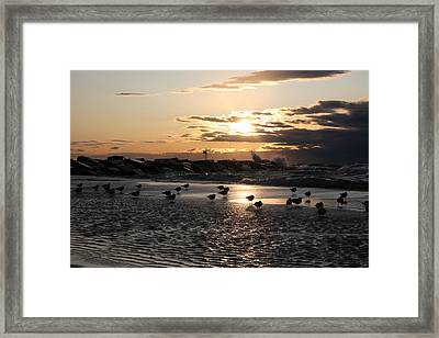 Seagulls In The Surf At Sunset Framed Print by Christopher Purcell