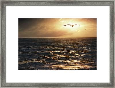 Seagulls Into The Sun Framed Print by Carlos Caetano