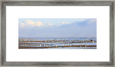 Seagulls On A Beach Framed Print by Svetlana Sewell