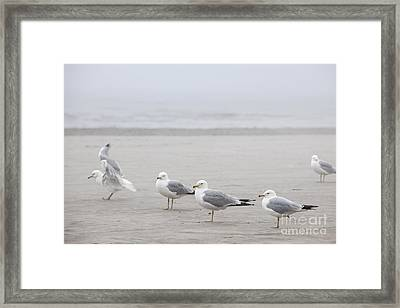 Seagulls On Foggy Beach Framed Print