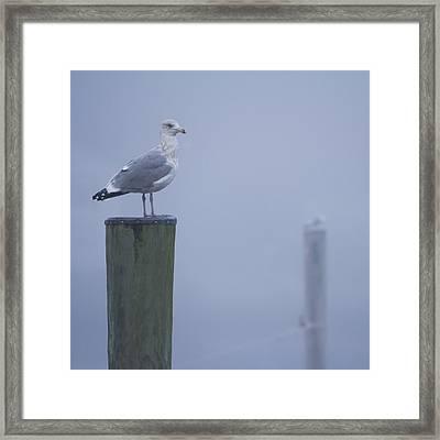 Seagulls On Pilings In Mystic Ct Framed Print by Kirkodd Photography Of New England