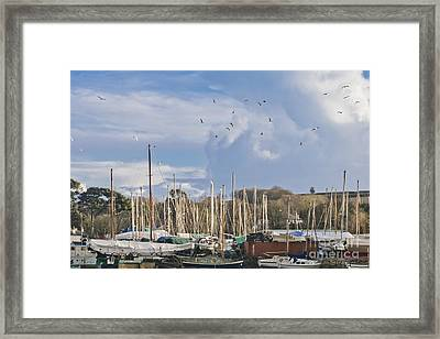 Seagulls Over Mylor Creek Boatyard Framed Print by Terri Waters