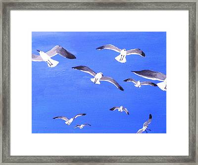 Seagulls Overhead Framed Print by Anne Marie Brown
