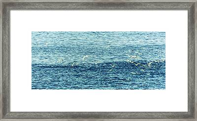 Seagulls Framed Print by Patrick Kain