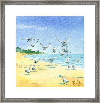 Seagulls Framed Print by Ray Cole