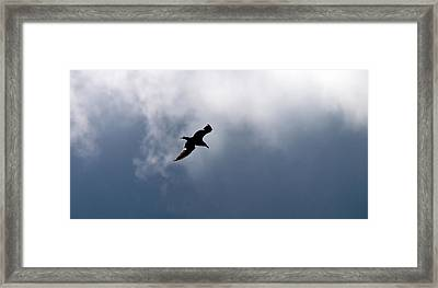 Framed Print featuring the photograph Seagull's Sky 1 by Jouko Lehto