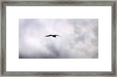 Framed Print featuring the photograph Seagull's Sky 2 by Jouko Lehto