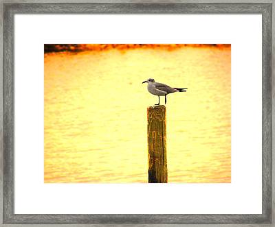 Seagulls Sunset Framed Print
