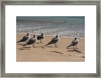 Seagulls  Framed Print by Zina Stromberg
