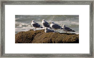 Seaguls Framed Print by Curtis Gibson