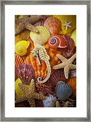 Seahorse And Assorted Sea Shells Framed Print by Garry Gay