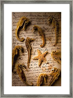 Seahorses And Starfish On Old Letter Framed Print
