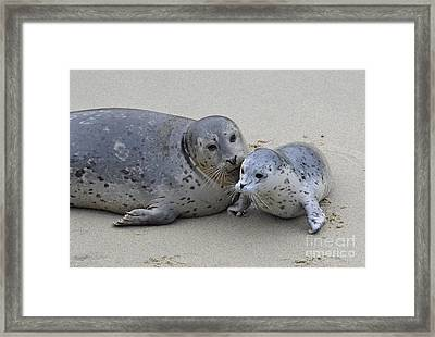 Seal Baby  Framed Print by Judy Grant
