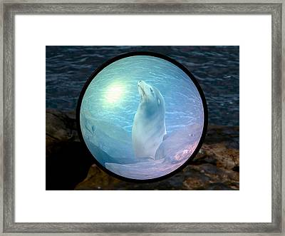 Seal Framed Print by Guillermo Mason
