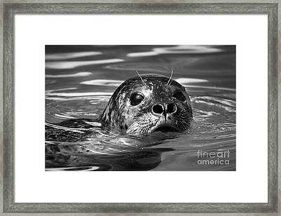 Seal In Water Framed Print
