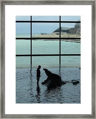 Seal Lion I Framed Print by Anna Villarreal Garbis