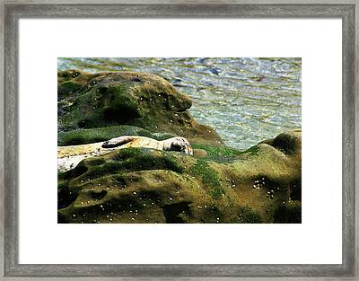 Framed Print featuring the photograph Seal On The Rocks by Anthony Jones