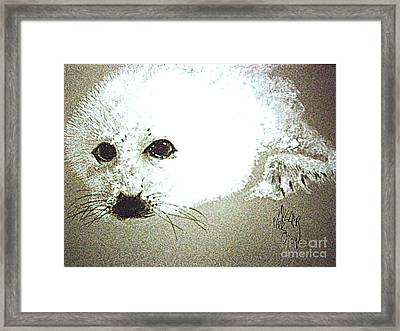 Seal Pup Portrait Framed Print by Paul Miller