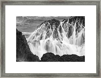 Seal Rock 6021 Framed Print