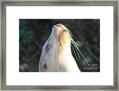 Framed Print featuring the photograph Sealed By A Kiss by Stephen Mitchell