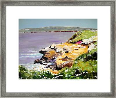 Seals In The Sun Lajolla Ca Framed Print