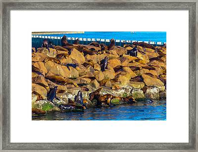 Seals On Jetty Rocks Framed Print by Garry Gay