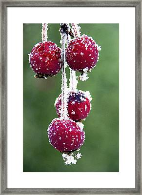 Seasonal Colors Framed Print by Marilyn Hunt