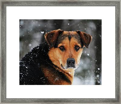 Framed Print featuring the photograph Search And Rescue Dog by Lila Fisher-Wenzel