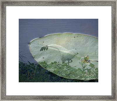 Search Framed Print by Priscilla Richardson