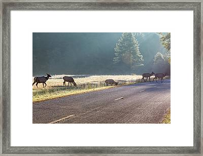 Searching For Greener Grass Framed Print