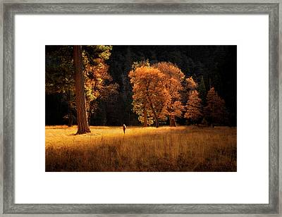 Searching For Light Framed Print