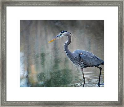 Framed Print featuring the photograph Searching For Lunch by Julie Andel