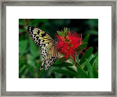 Searching For Nectar Framed Print