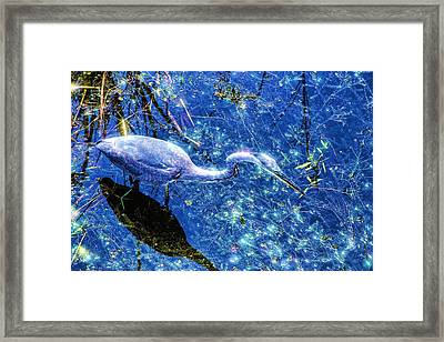 Searching For The Right Gem Framed Print by Dennis Baswell