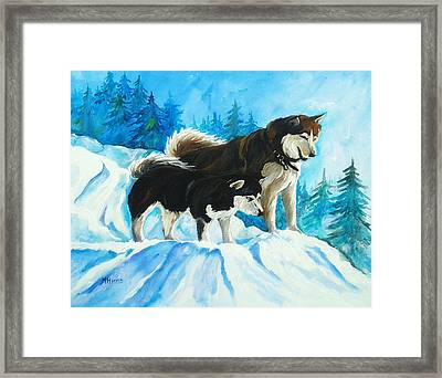 Searching Huskies Framed Print by Marla Hoover
