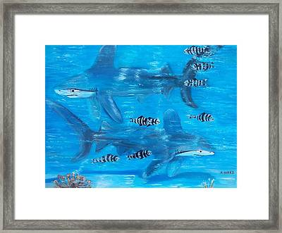 Searching Sharks Framed Print