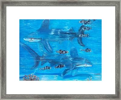 Searching Sharks Framed Print by Aleta Parks