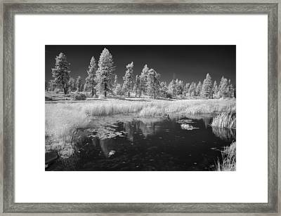 Searching The Pond Framed Print