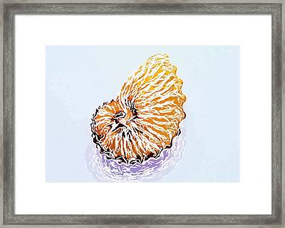 Seashell 3 Framed Print