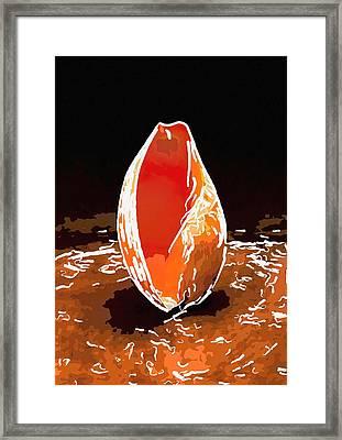 Seashell 4 Framed Print