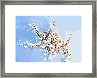 Seashell 6 Framed Print