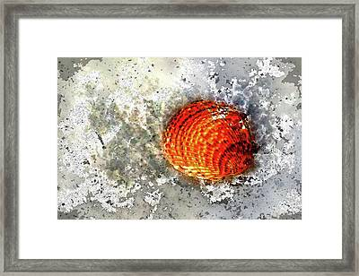 Seashell Art  Framed Print