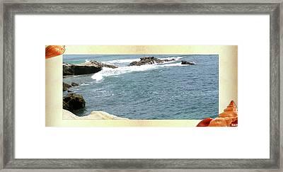 Seashell By The Seashore Framed Print by Debra     Vatalaro