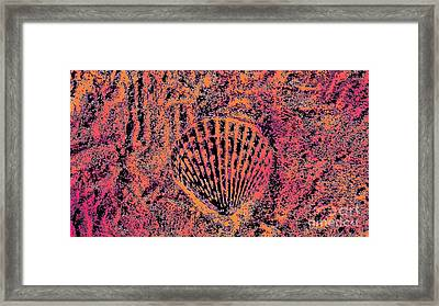 Seashell Delight Framed Print