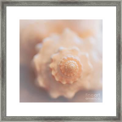 Seashell Dream Framed Print