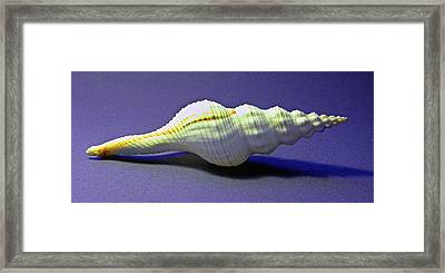 Seashell Fusinus Irregularis Framed Print by Frank Wilson