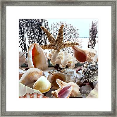 Seashell Galore Framed Print