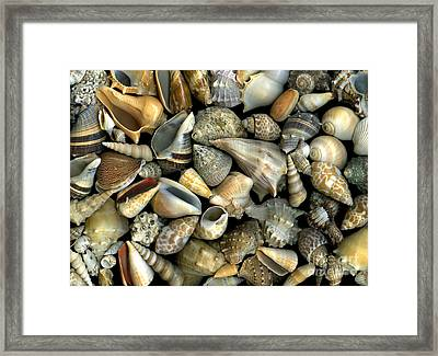 Seashell Medley Framed Print by Christian Slanec
