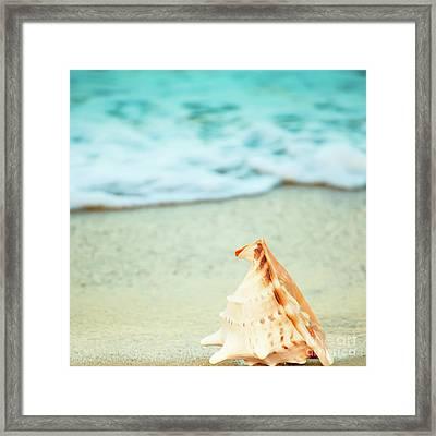 Seashell Framed Print by MotHaiBaPhoto Prints
